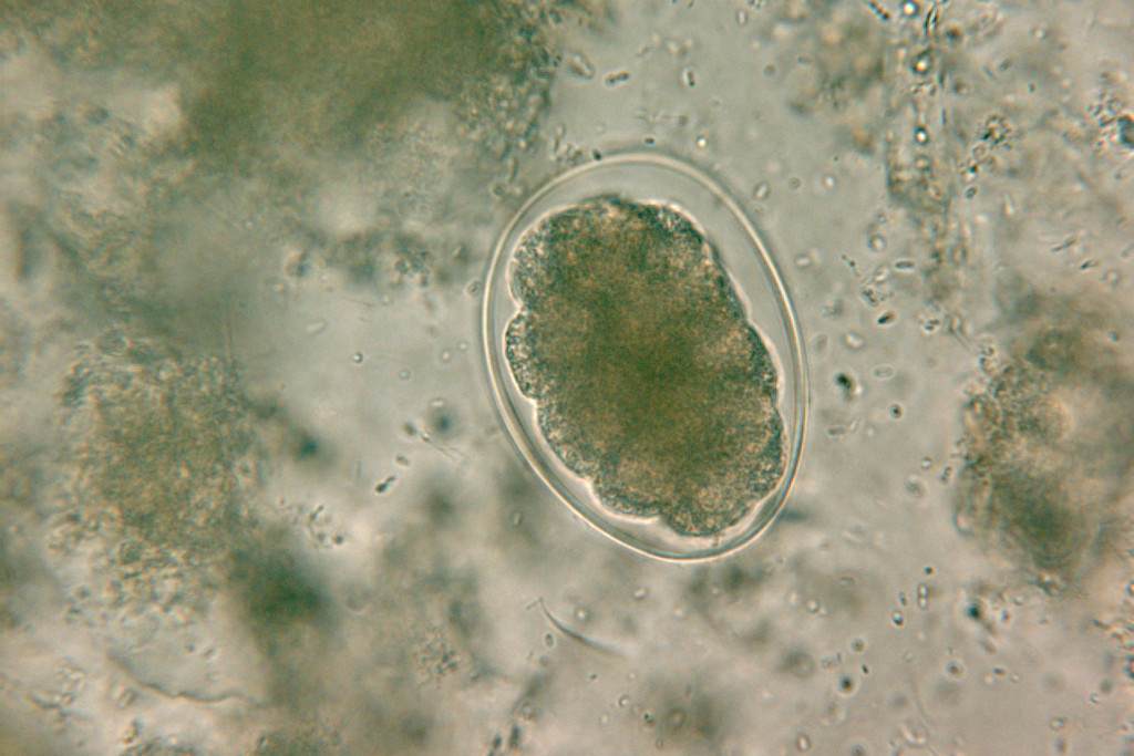 Swiss Tph Parasitologie